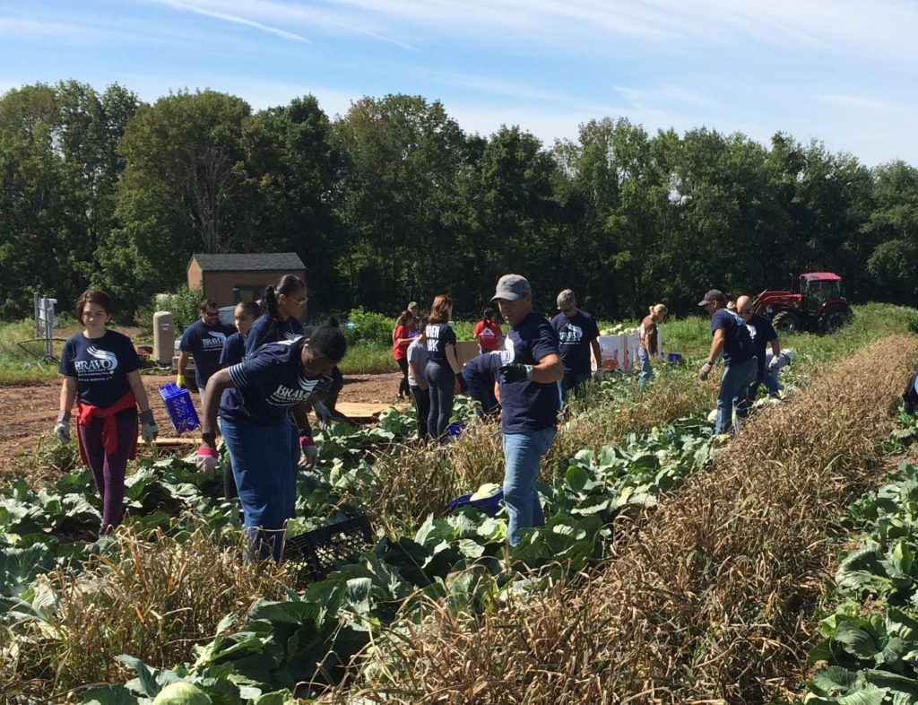 Team Harvests Cabbage and Corn